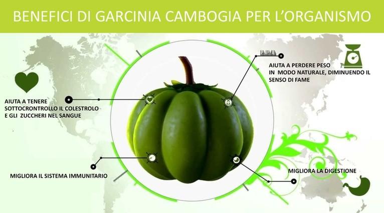 Garcinia cambogia rapid diet protein shake review photo 7