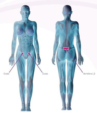 immagini su una prostata successivamente turpentine